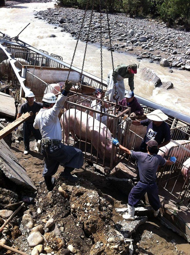 災害復旧作業 豚舎河川氾濫災害復旧